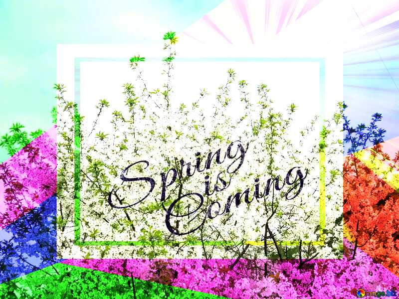 Flowering tree template card frame with inscription Spring is Coming №31190
