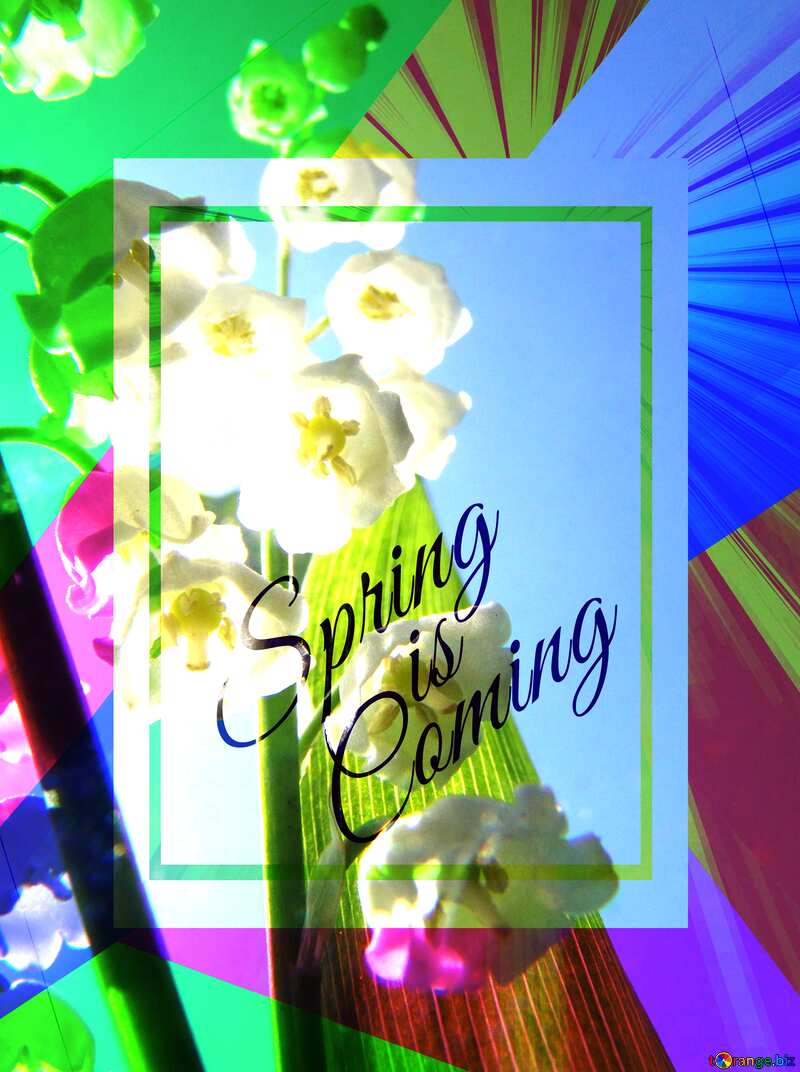 Flowers lily template card frame with inscription Spring is Coming №5266