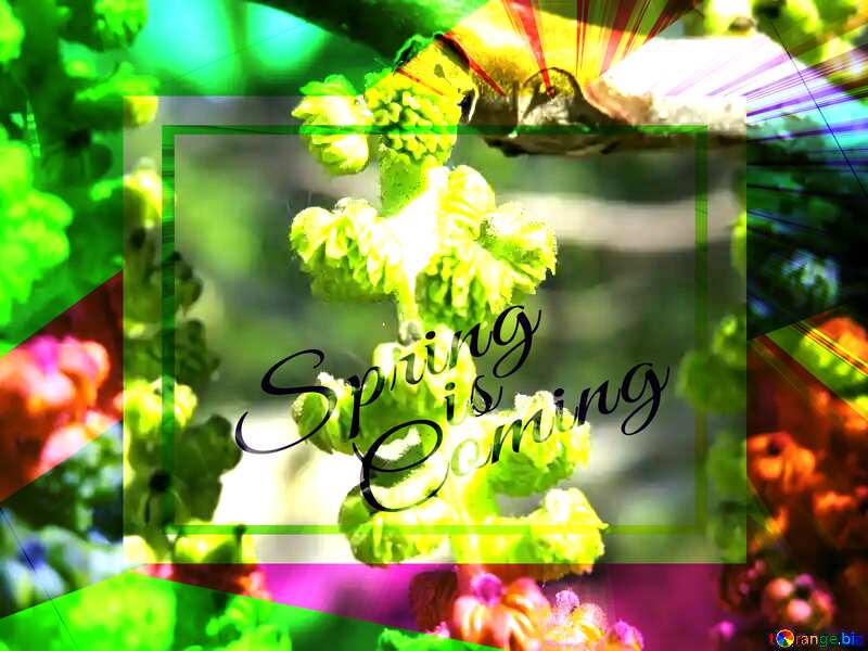 Flowers of Walnut template card frame with inscription Spring is Coming №31440