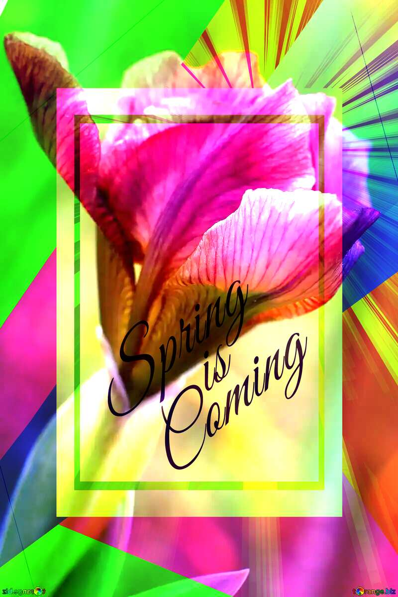 Iris flower bud template card frame with inscription Spring is Coming №37687