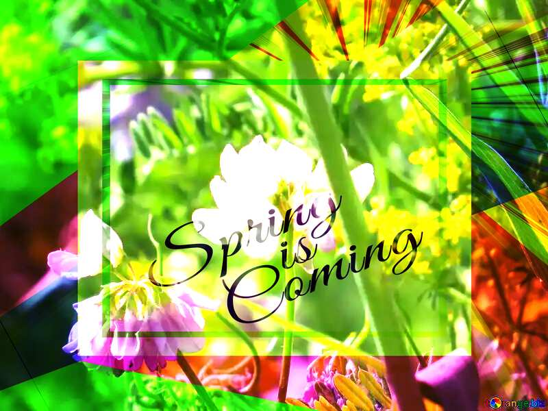 Multicolored wild flowers are pea template card frame with inscription Spring is Coming №34385