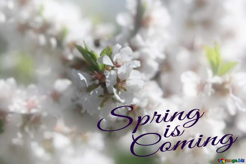 Spring blooming background Spring is coming №39771