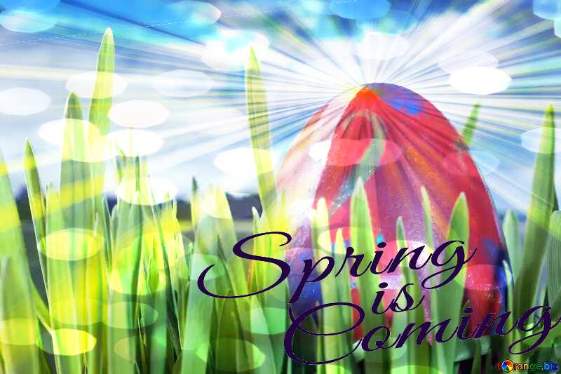 Easter  Egg  Spring   grass Spring is coming №8161