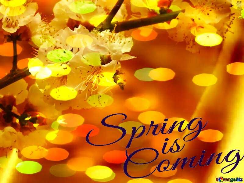 Spring flowering tree Spring is coming №29950