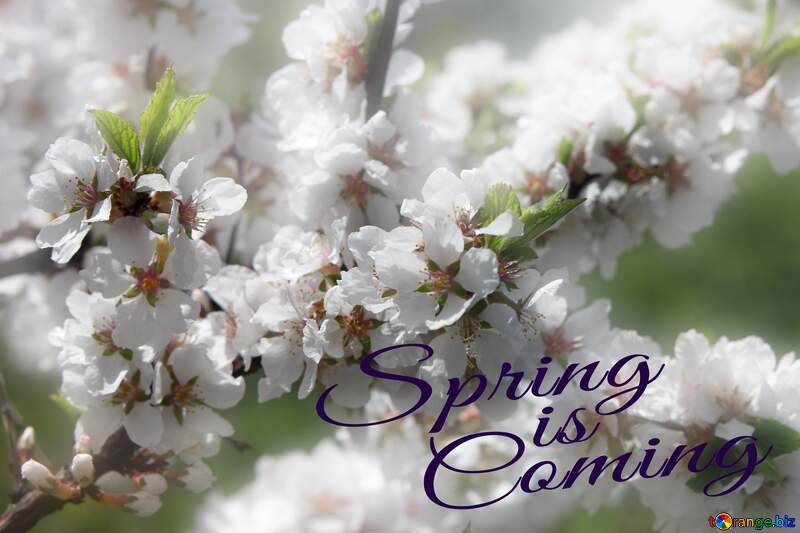 Spring pictures on wallpaper for desktop Spring is coming №39775