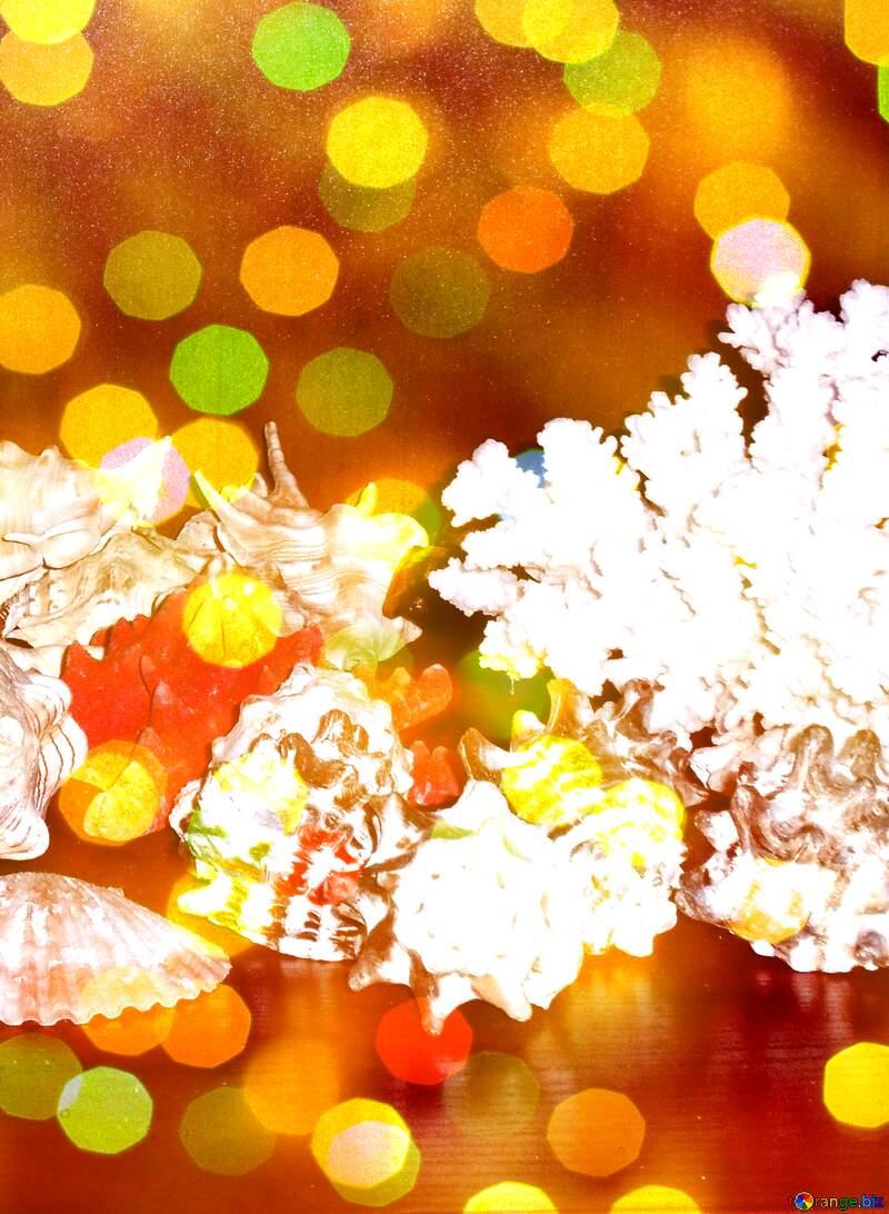Collection of seashells  №18159
