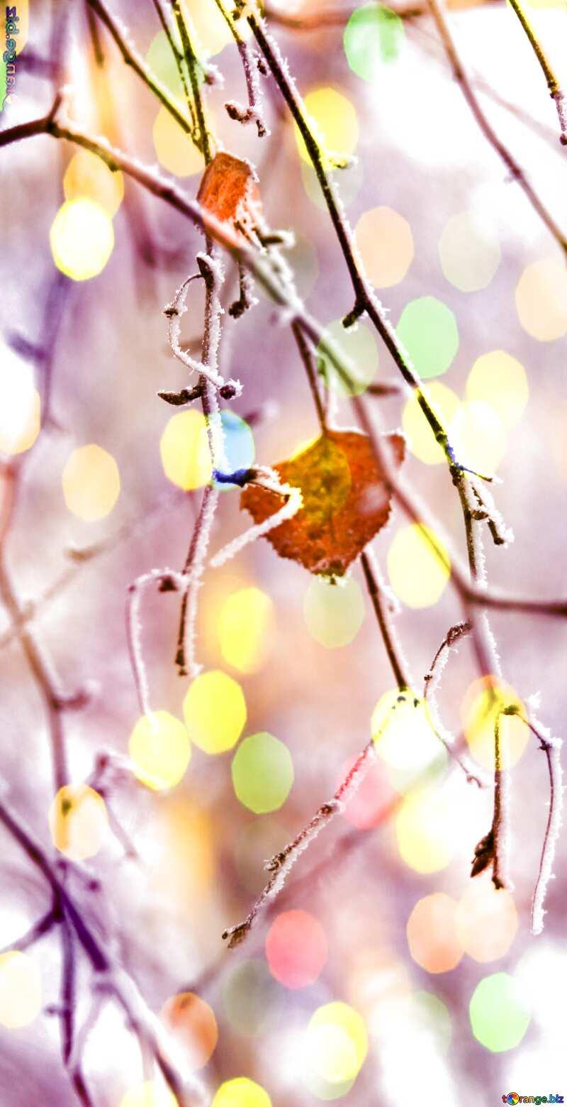 Floral Illustration Luxury Winter  Background №439