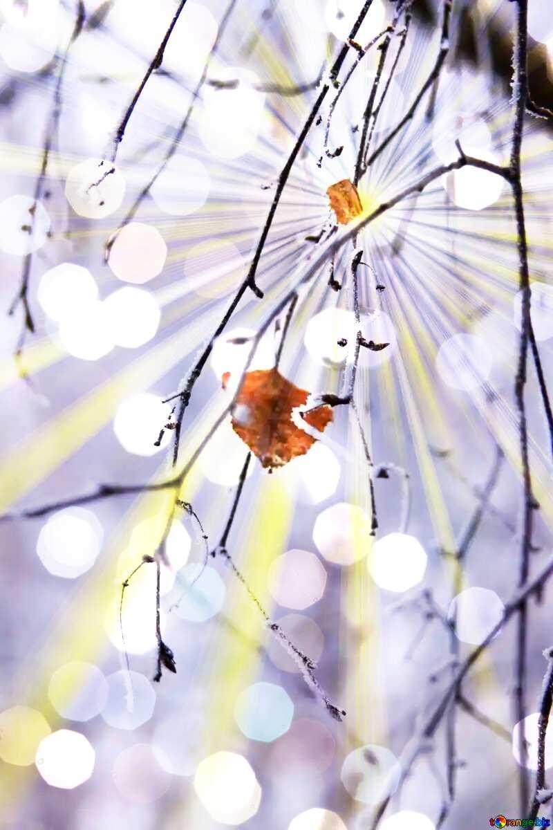Winter Background №439