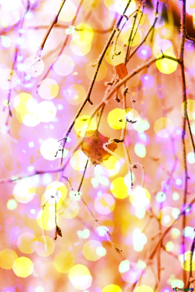 Winter forest Last leaf  Bokeh colored lights background №439