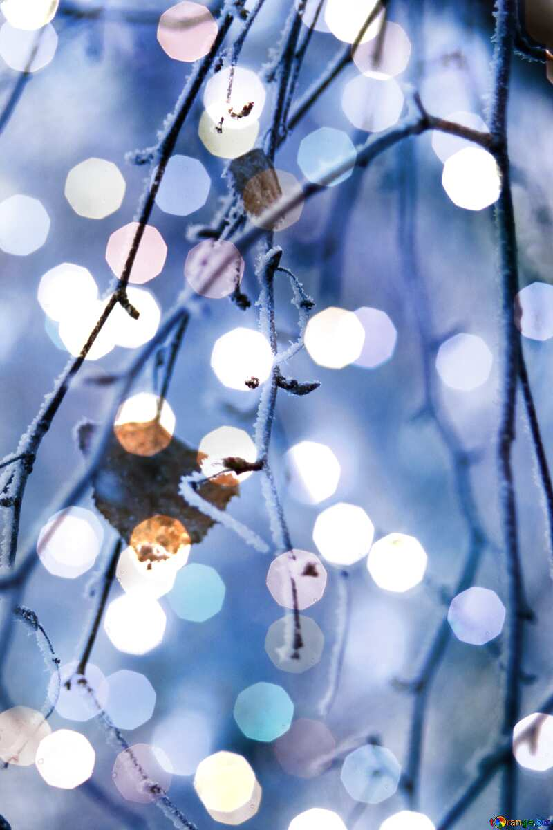 Winter forest last leafe Christmas background №439