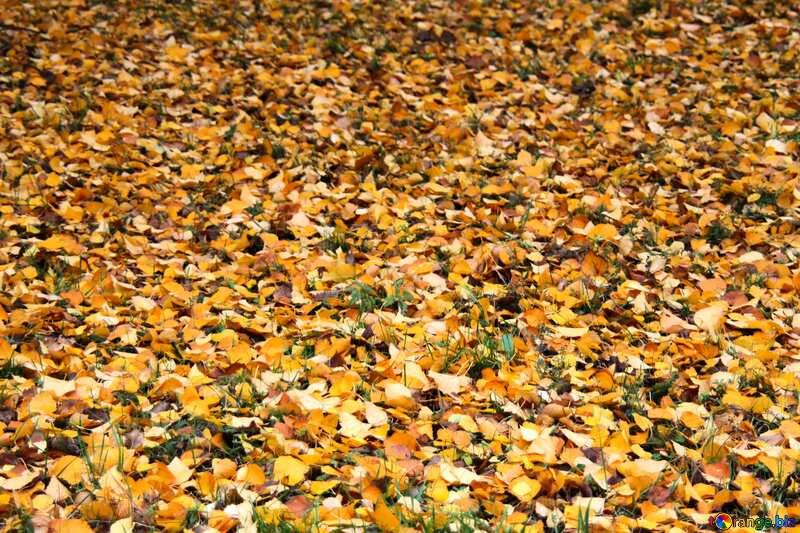 fallen leaves Texture. №3339