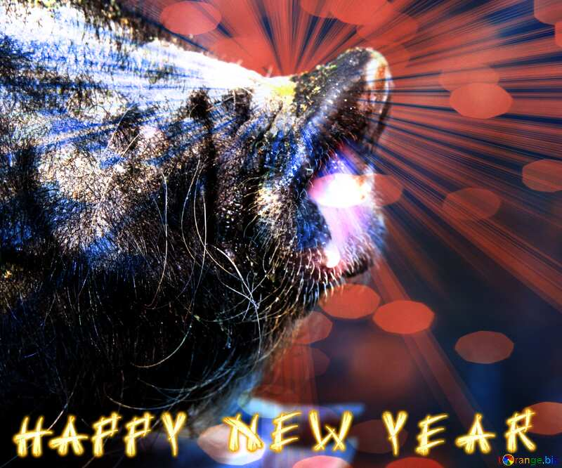 Happy New Year of pig 2020 card background №1955