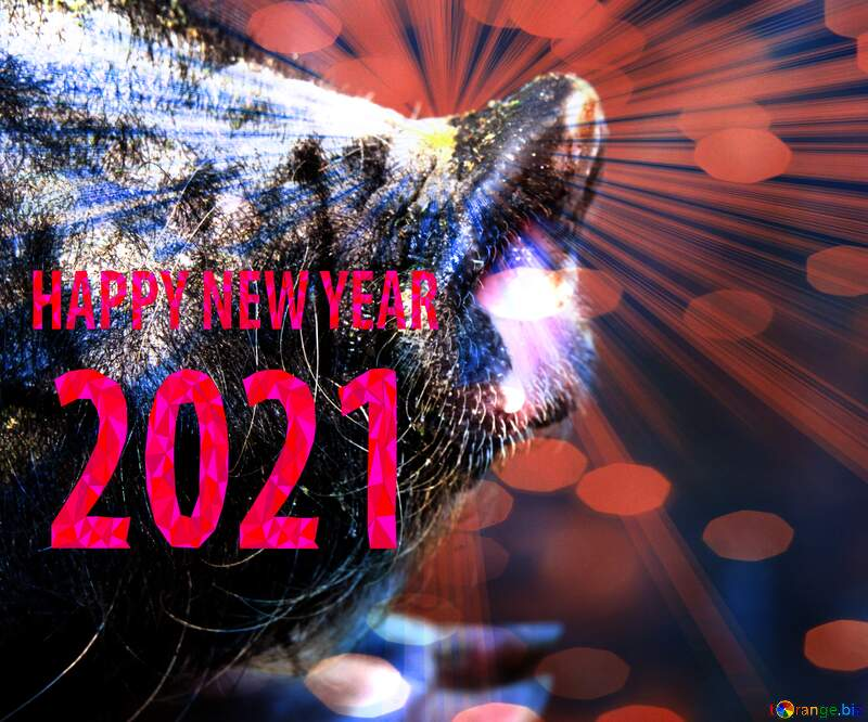 Happy New Year of pig 2021 card background №1955