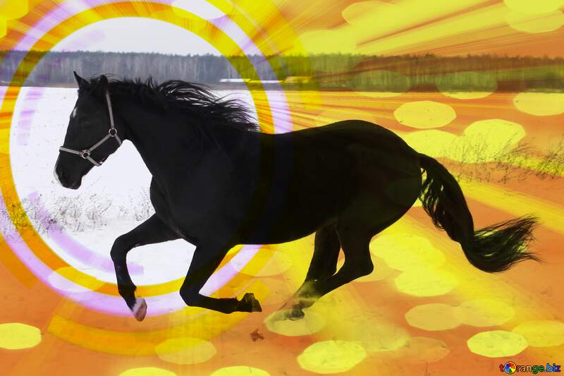 Horse card №18191
