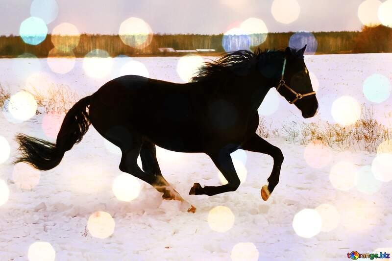 Horse on the snow №18191