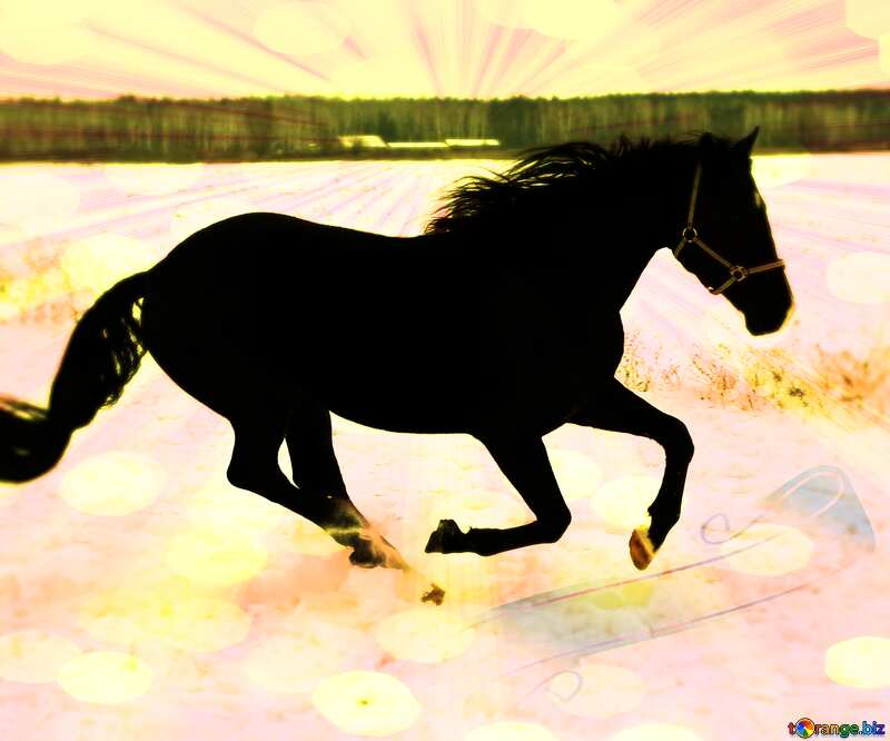 Horse  snow card background №18191