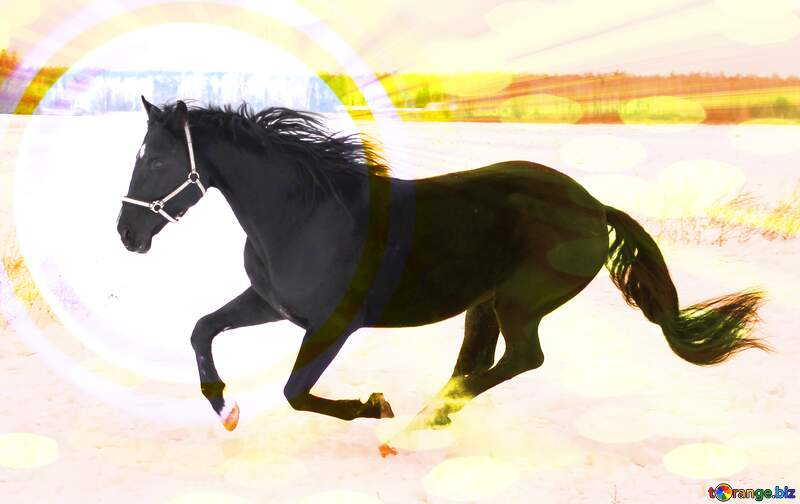 Horse on snow Colorful Circle Background №18191