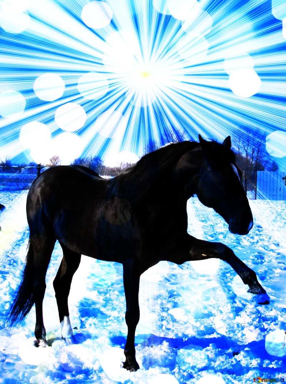 Horse winter card №462