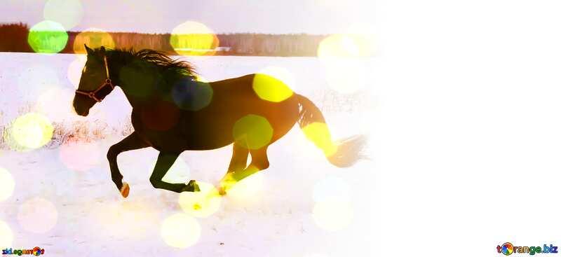 Horse winter  Design Creative Card Background №18191