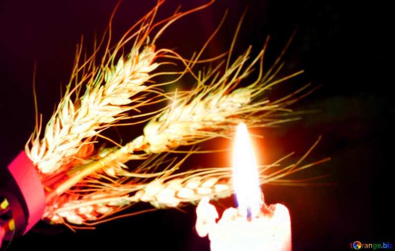Колосок в темноте, освещённый горящей свечой. Вечная память №37800