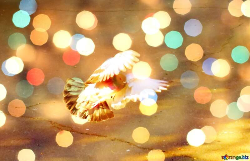 Pigeon flies Background №42207