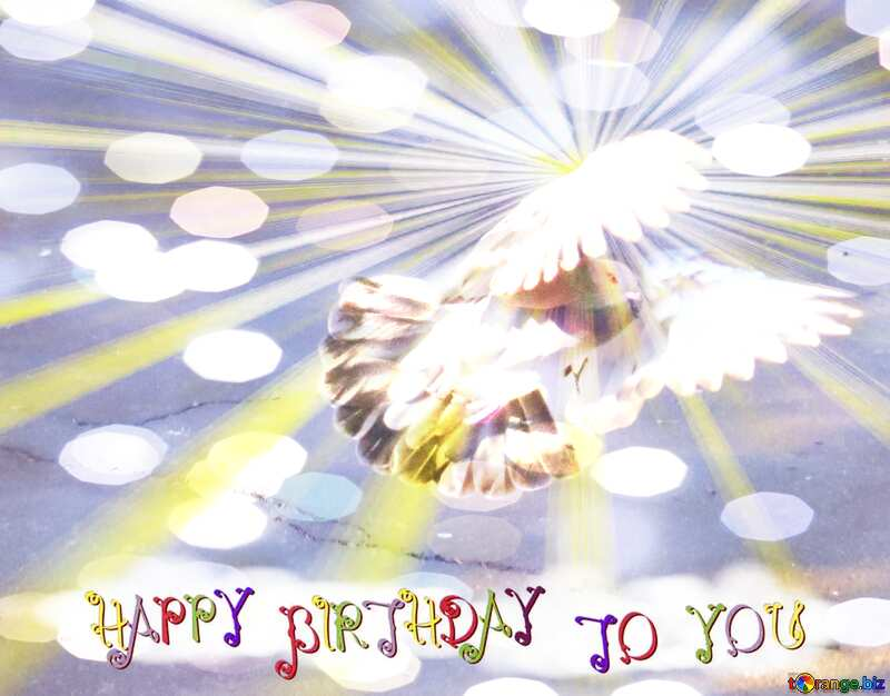 Pigeon flies Greeting Happy Birthday Card №42207
