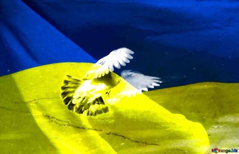 Pigeon flies Peace Ukrainian Background №42207
