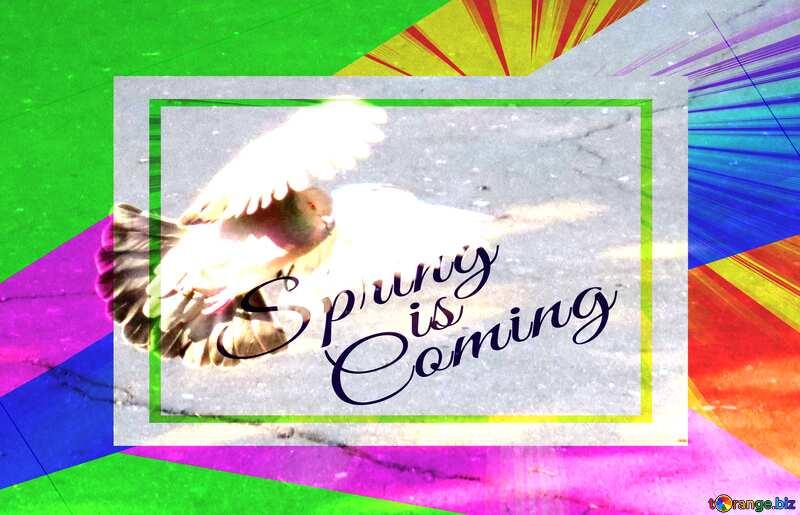Pigeon flies Spring Template Card №42207