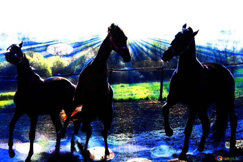 Three horse  Illustration Creative Background №1631