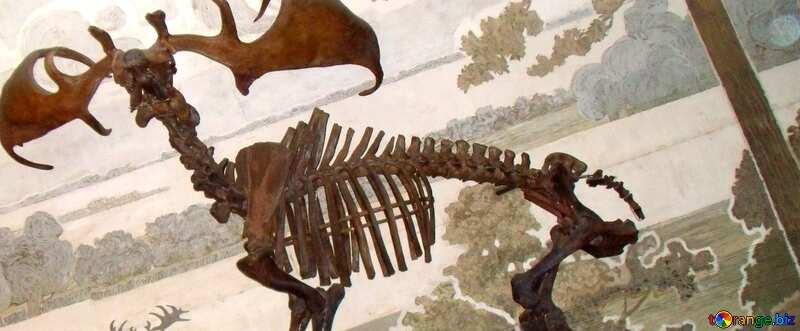 Cover. Prehistoric elk skeleton. №21471