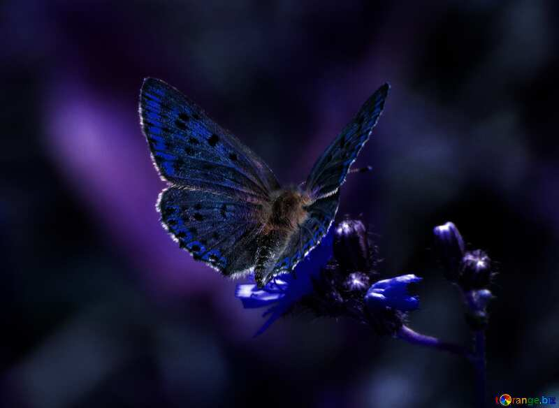 Cyan color. Flying butterfly. №25913