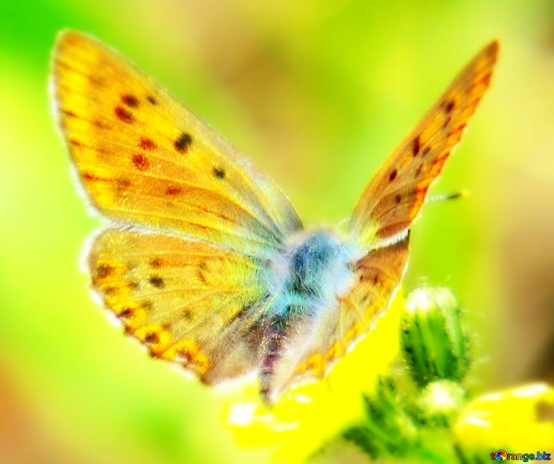 Image for profile picture Beautiful butterfly. №25913