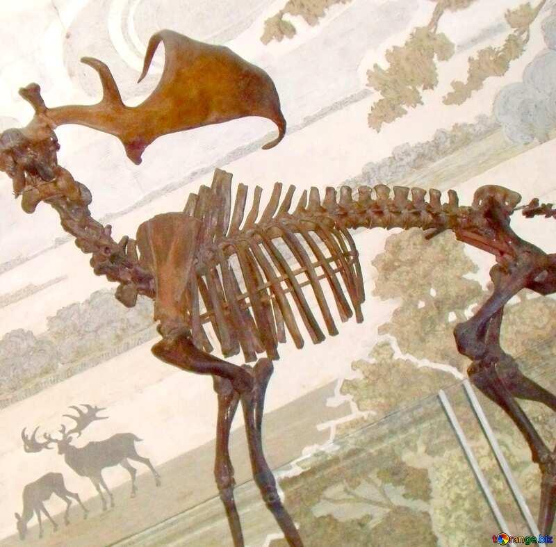 Image for profile picture Prehistoric elk skeleton. №21471