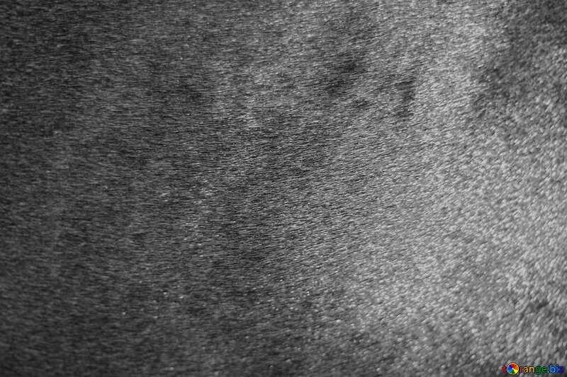 Monochrome. Horse hair.Texture.. №21887