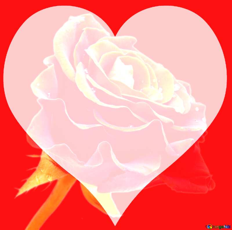 Red rose love card  background №17106