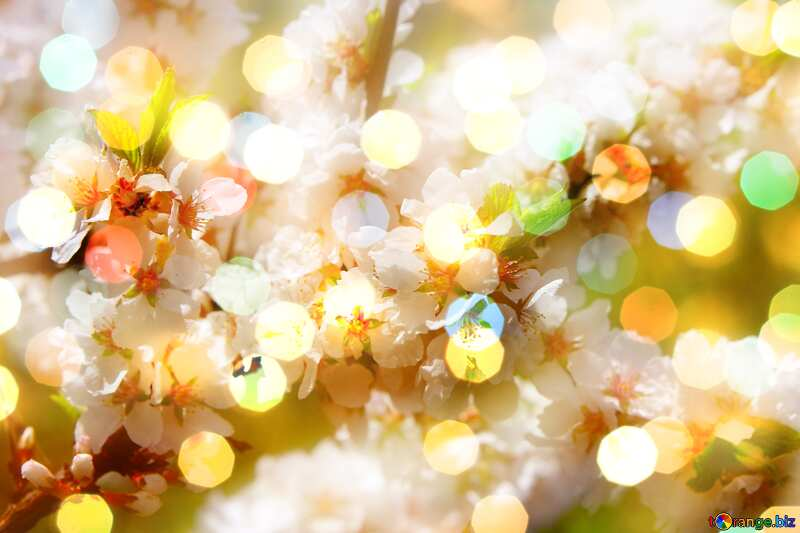 Spring pictures bokeh  blurred background №39775