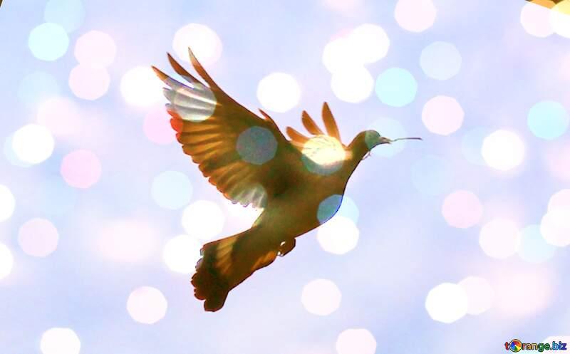 Dove of peace №33802