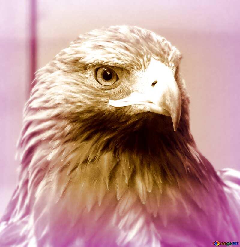 eagle №45229