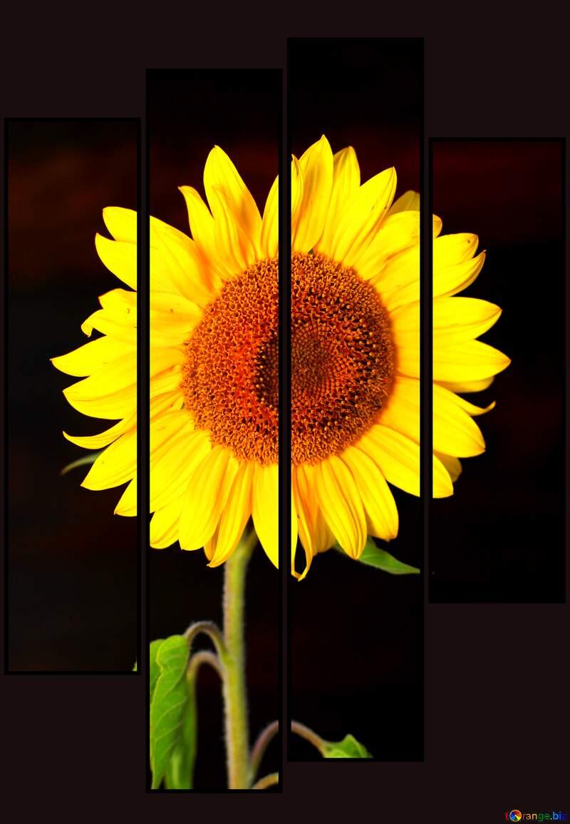 Sunflower modular №32797