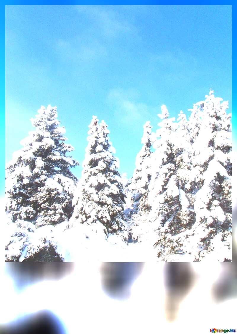 Snowy Pine Tree blank card №10576