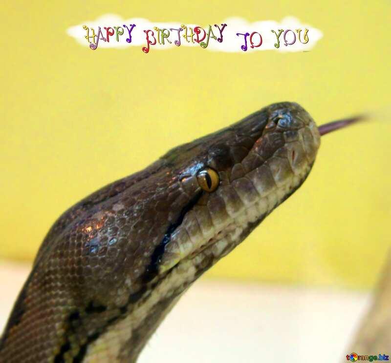 Happy birthday card Snake №10322