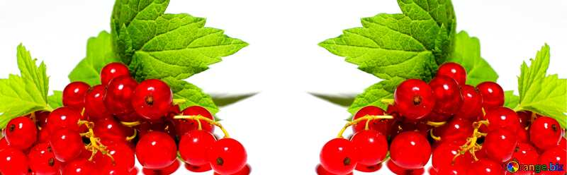 Red currant background №33227