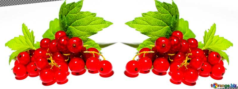 Red currant template №33227