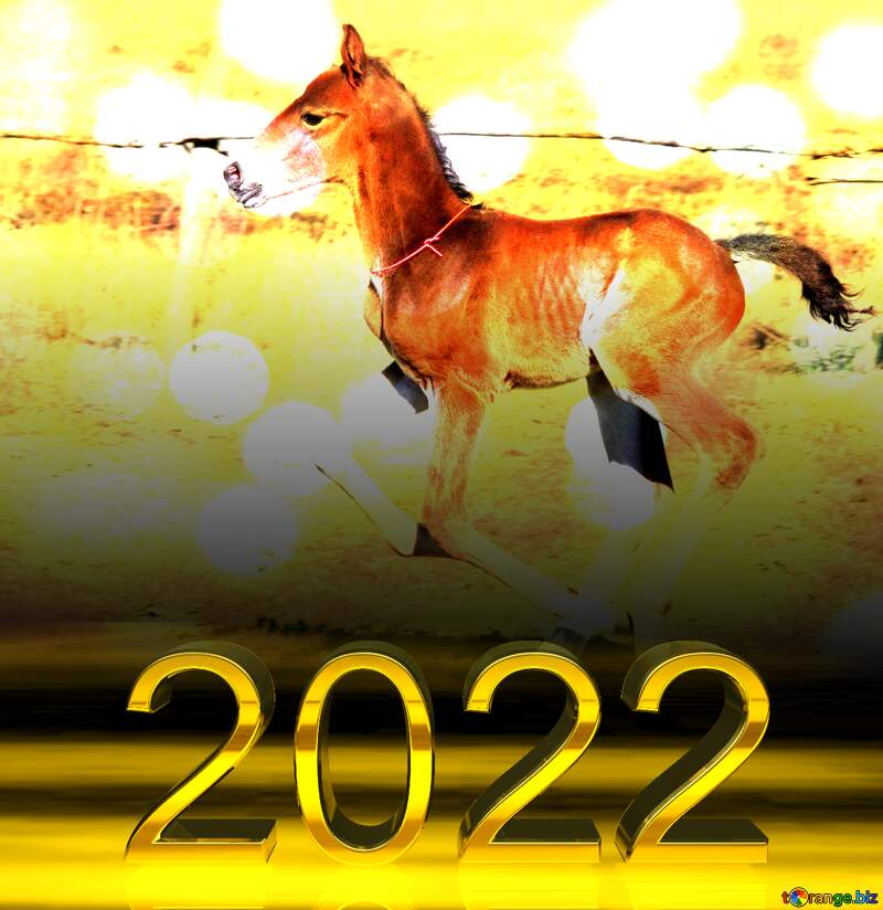 2022 gold digits    Funny horse Foal on Bokeh lights background №3386