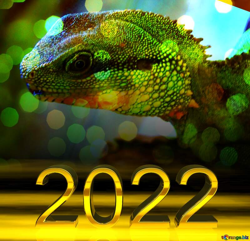 2022 gold digits The texture. Water  agama.  Pattern  at  head.    Water agama. bokeh background №10249