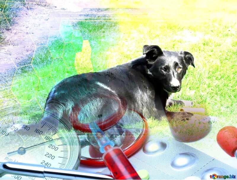 Dog veterinary medicine №50377