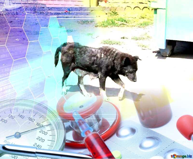 Dog veterinary medicine №26887