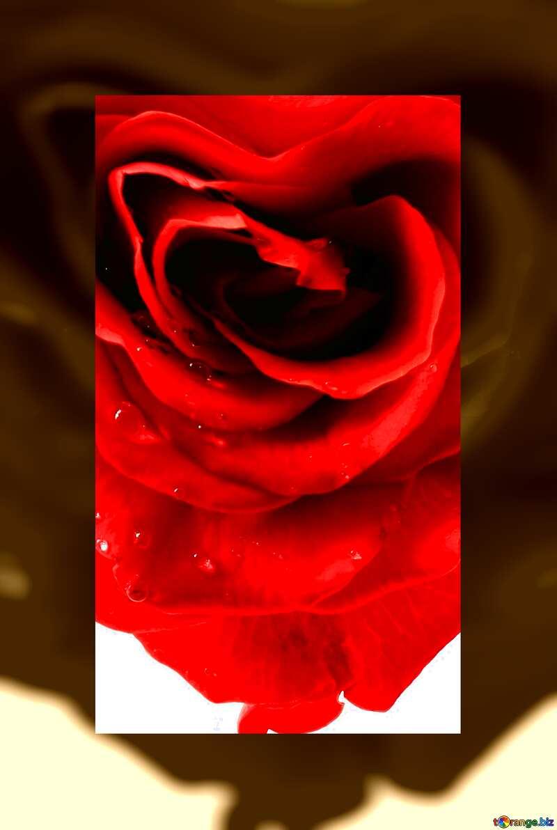 Самые красивые картинки роза бойлер курицы углях