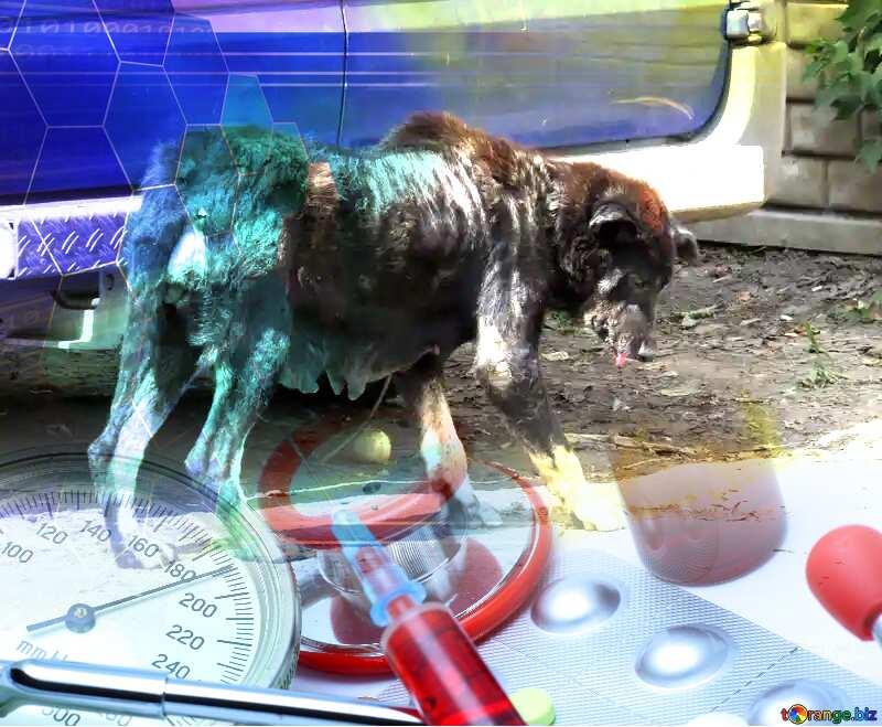 street Dog veterinary medicine №26889