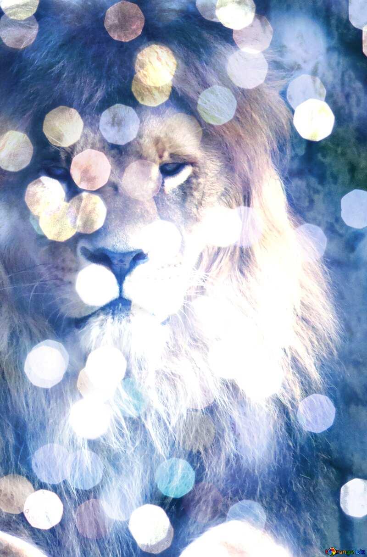 lion №44974